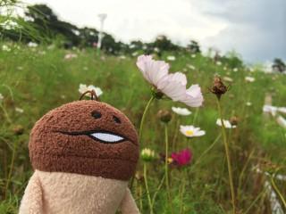長なめことコスモス - モヤヒルズ - 2013年9月21日
